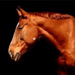 Abate de Cavalos: a verdade por trás da indústria alimentícia brasileira