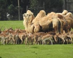 Ibama determina eutanásia para mais de 300 cervos no Pampa Safari em Gravataí